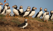Dave Gray's Puffin Cruises