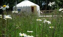 Ivy Grange Farm Yurts