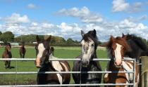 World Horse Welfare Penny Farm