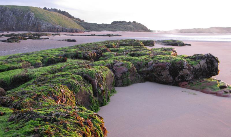 The English Coast – a stocked larder!