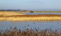 RSPB Titchwell Marsh Nature Reserve