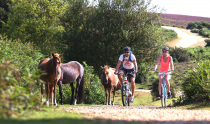 Cyclexperience (New Forest)